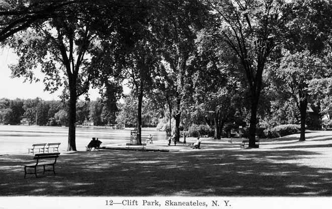 clift-park-elm-trees