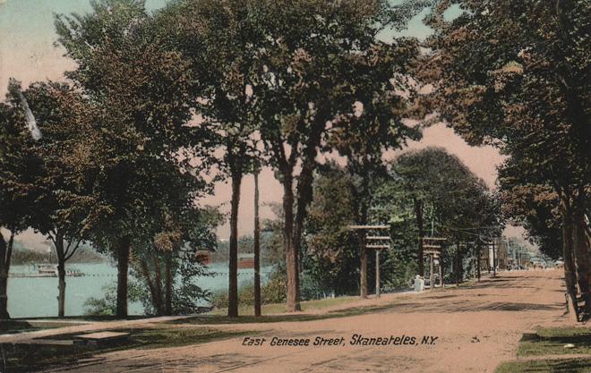 Trees East Genesee