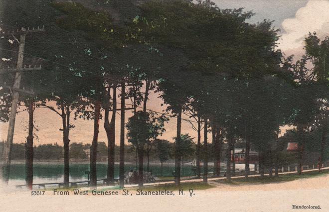 Trees West Genesee
