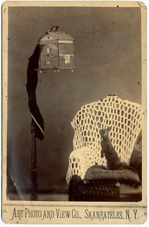 cat-watching-bird-in-cage